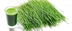 wheatgrass-960x420